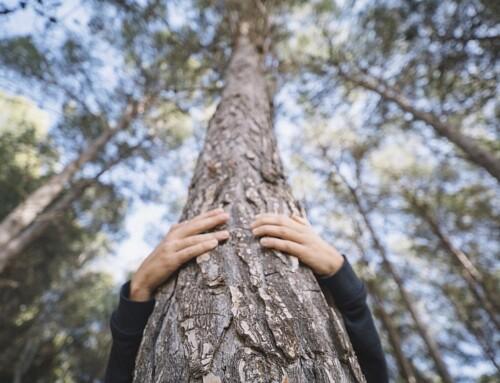 Un legame ancestrale con la natura: biofilia, legno e benessere